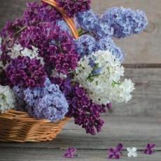 hübscher bunter Flieder im Korb auf Holztisch - pretty colorful lilac in the basket on wooden table - joli lilas coloré dans le panier sur la table en bois