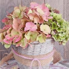 zartrosa blühende Hortensie im Vintagekörbchen - pink flowering hydrangea in vintage basket - Hortensia à fleurs rose dans un panier vintage