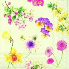 Narzissen & Stiefmütterchen - Daffodils & Pansies - Jonquilles et pensées