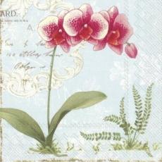 2 schöne Orchideen - 2 beautiful orchids - 2 belles orchidées