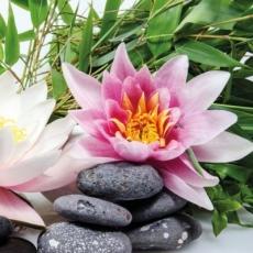 wunderschöne Seerose - beautiful water lily - beau nénuphar