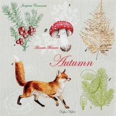 Fuchs im Herbst - Fox in the fall - Fox à l automne