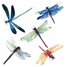 Libellen - dragonflies - libellules