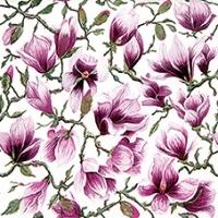 zarte Magnolien - delicate magnolias - magnolias délicats