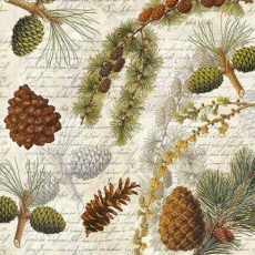 Tannenzweige & Zapfen - Fir branches & cones - Branches et cônes de sapin