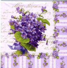My Lady violets
