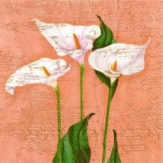 Calla Blossoms