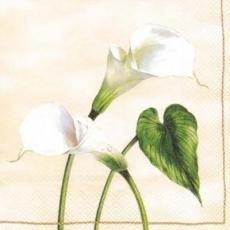 Schöne Calla - Arum Lily - Calla merveilleux - Beau lis dArum