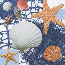 Muscheln & Seesterne - Shells & starfish - Coquillages & étoiles de mer