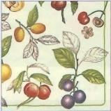 Alle Früchte - All kind of fruits