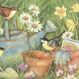 Vögel besuchen Gieskanne, Blumentopf mit Blumenzwiebel im schönen Garten