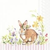 süsse Häsin mit bunten Blumen, Osterglocken