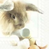 Hase und Eierschalen