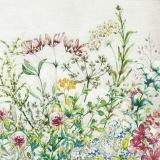 schöne Wiesenblumen