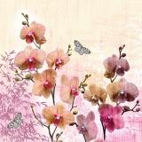 Wunderschöne Orchideen werden von Schmetterlingen besucht