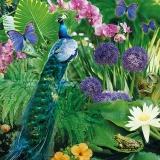 Orchidee, Allium und Farne werden besucht von Fröschen, Pfau Schnecke und Schmetterlingen