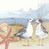 Zwei Möwen am Strand mit Muschel und Seestern