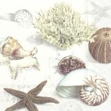 Meeresschätze, Muschel, Seestern, Seeigel, Koralle und Schnecke