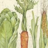 Frisches Gemüse, Maiskolben, Lauch, Möhre und Salat