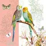 Zwei süße Wellensittiche sitzen auf einem Zweig und werden von Drei Schmetterlingen von einer exotischen Blüte besucht