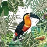 Tukan und tropische Palmenblätter