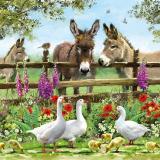 Gänse mit Küken besuchen 3 Esel mit kleinem Rotkehlchen