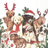 Hunde Weihnachten