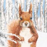 Eichhörnchen im verschneiten Birkenwäldchen