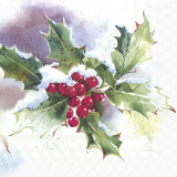 Weihnachtsstern und WinterIlex