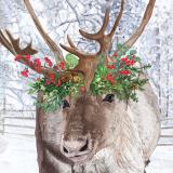 Rentier mit winterlichem Kopfschmuck