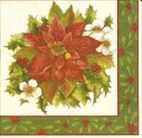 Wundeschöne Blüten zur Weihnachtszeit