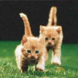 2 Kätzchen erobern die Wiese, Katzen - 2 kittens conquer the meadow, cats - 2 chatons conquièrent le pré, les chats