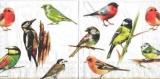 Bunte Vogelschar- Birds