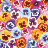 Bunter Stiefmütterchenteppich - Coloured pansy carpet - Tapis de pensée multicolore