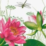 Libelle auf Blütensuche - Waterlily & Dragonfly