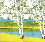 Birkenlandschaft - Birch scenery - Paysage de bouleaux