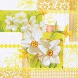 Kleine Narzissen - Little daffodils - Petits jonquilles