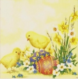 Küken, Ostereier & Frühlingsblumen - Poussins, oeufs de Pâques & fleurs de printemps - Fledglings, Easter eggs & spring flowers -