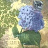 Flora Mystique Hydrangea blue