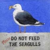 Bitte die Möwen nicht füttern - Do not feed the seagulls