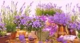 Lavendel & Glockenblumen lila - Lavender & bellflowers mauve - Lavande & campanules lilas