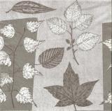 Blätter - Laub