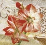 Wunderschöne Amaryllis -  Beautiful Amaryllis - Belle Amaryllis