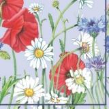 Margeriten, Korn- & Mohnblumen - Margeriten, corn & poppy flowers - Marguerites, grain et coquelicots