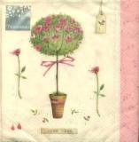 Rosenbäumchen - Rose tree