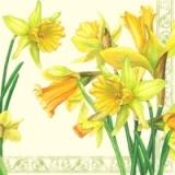Gelbe Narzissen - Yellow daffodils
