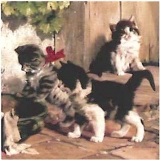 Spielende Katzen, Kitten, Katzenkinder - Playing kitties, cats - Jouer chats chatons, chatons