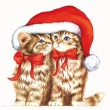 2 Kätzchen unter Santas Mütze - 2 kittens in Santas hat