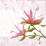 Magnolie rose