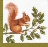 Eichhörnchen an einer Eichel - Squirrel & acorn